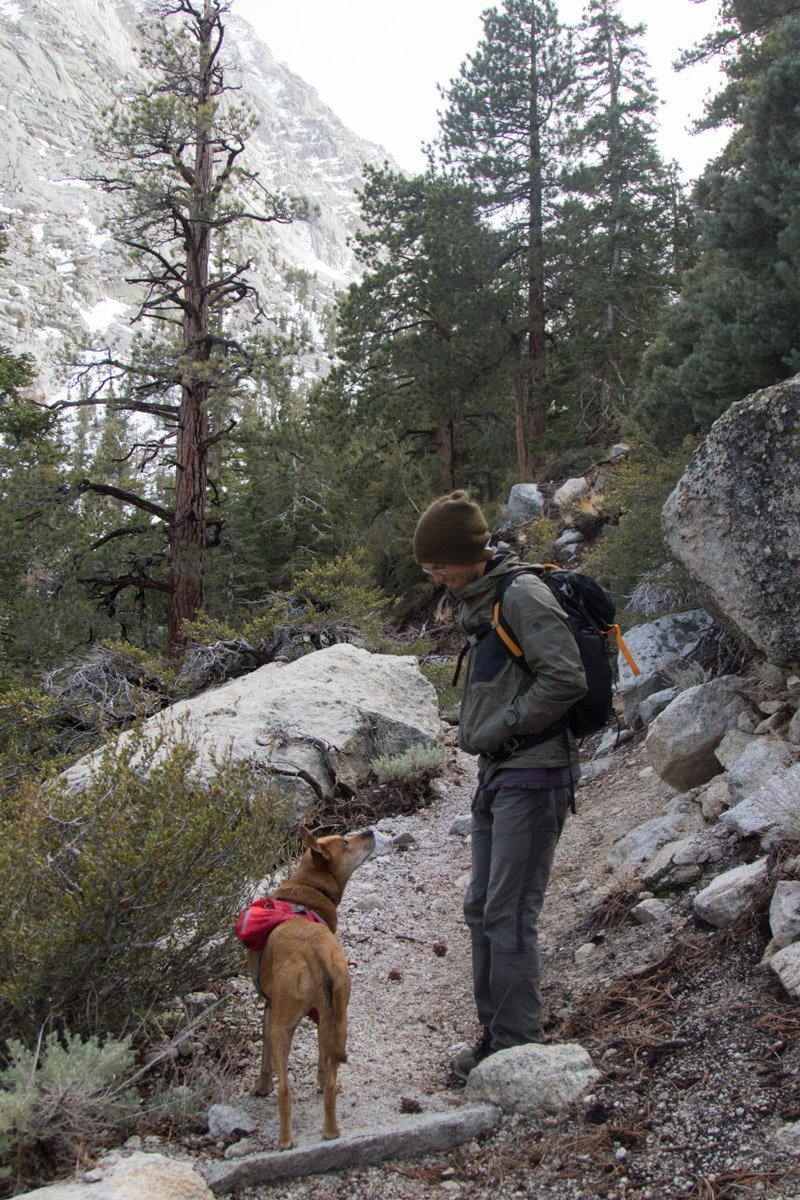 dog hiking in the eastern sierras
