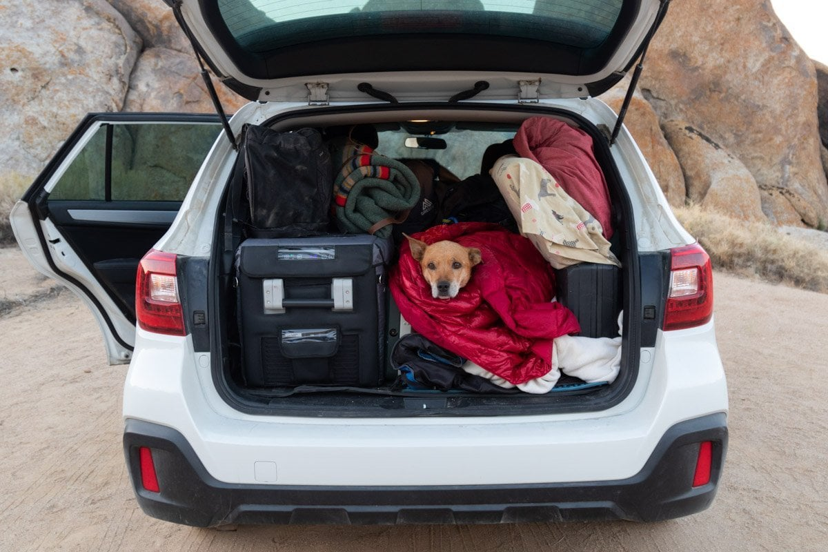 dog in a subaru