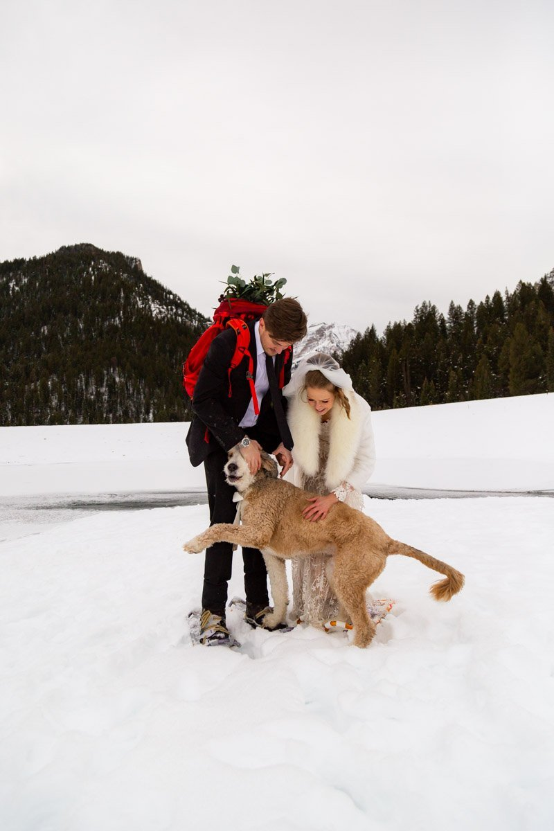 a loving dog on a winter elopement day