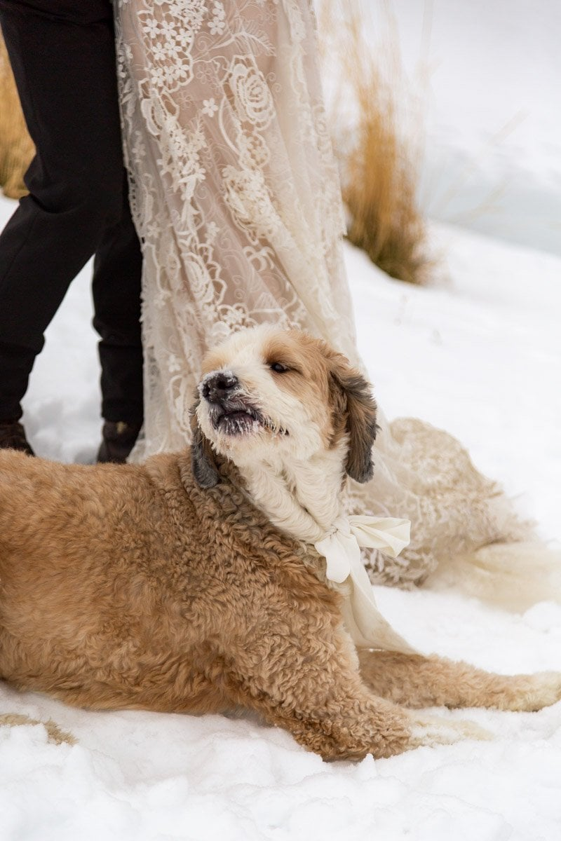 a happy pup in the snow