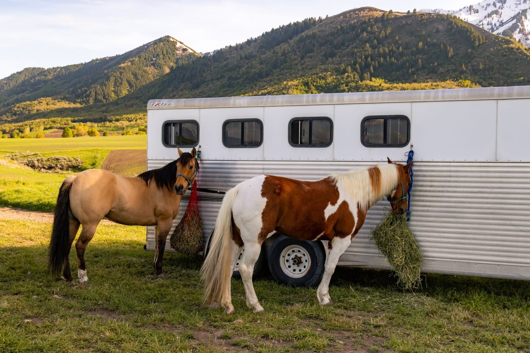 horses ready for a mountain elopement